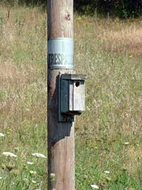 A electrical pole that includes attachments on the pole itself.